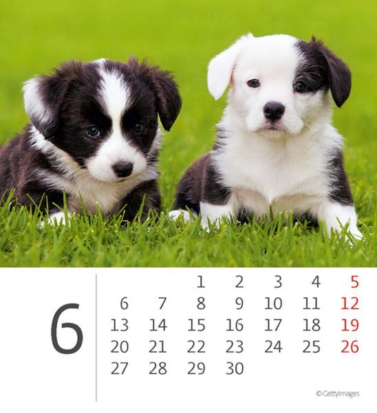 Měsíční kalendář Mini Puppies 2022