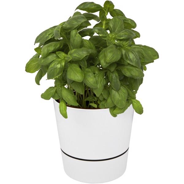 Jednoduchý květináč do kuchyně Herbs - Bílá