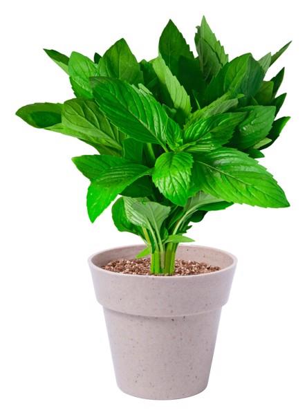 Sada Květináčků S Bylinkami Nertel - Přírodní