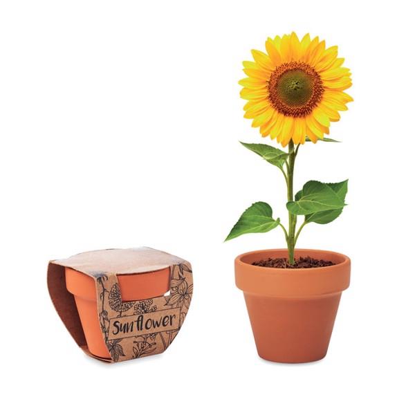 Doniczka, słonecznik Sunflower