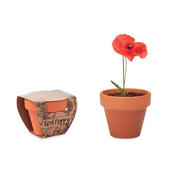 Terracotta pot 'poppy' Red Poppy