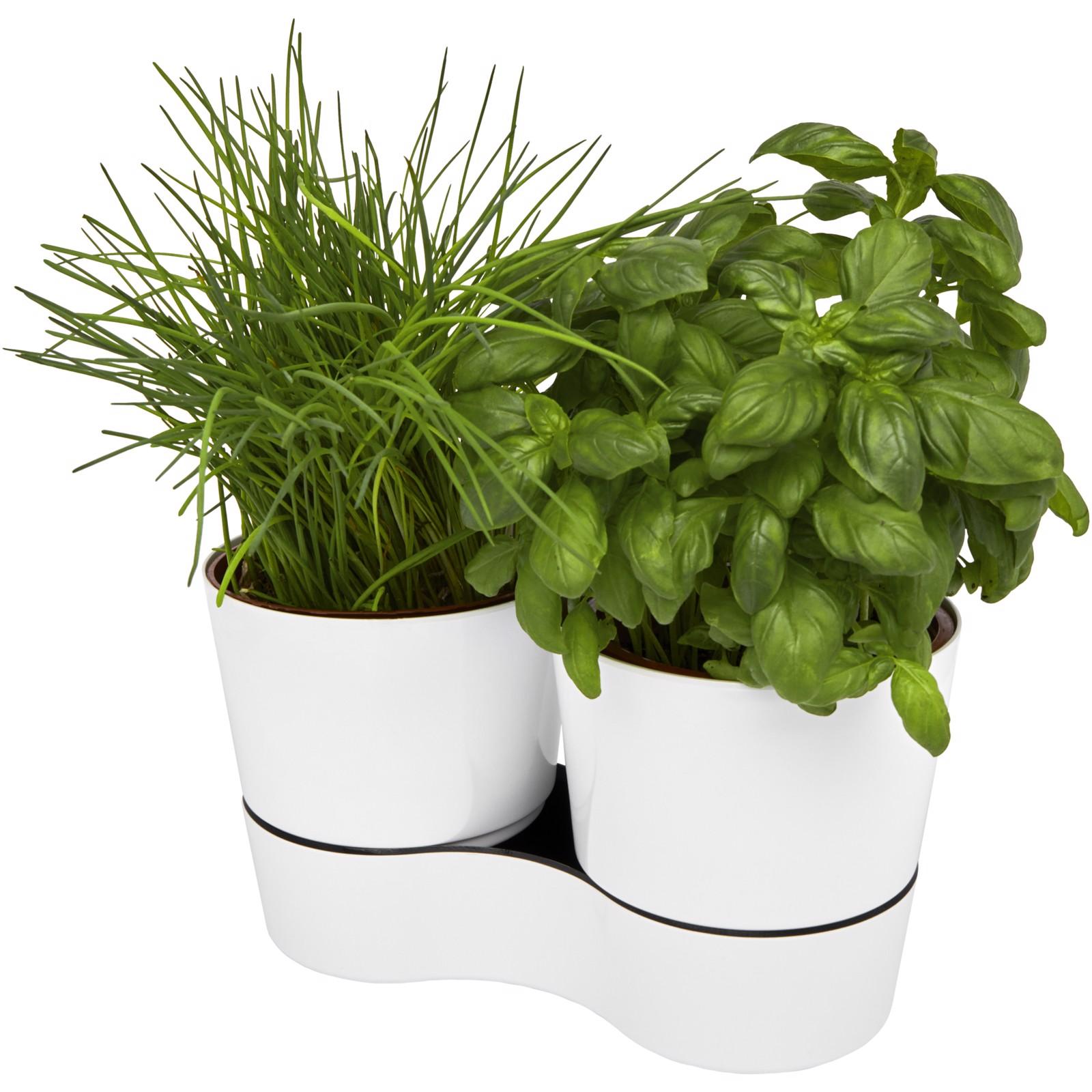 Herbs twin kitchen pot - White