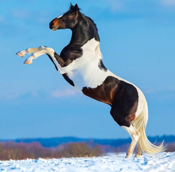 Měsíční kalendář Horses 2022